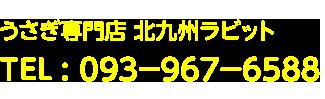 うさぎ専門店 北九州ラビット TEL : 093-967-6588