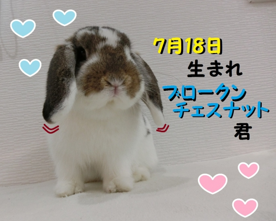 CIMG8293