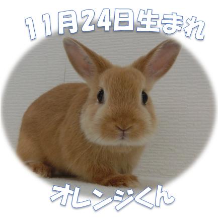 オレンジくん11月24日生まれ