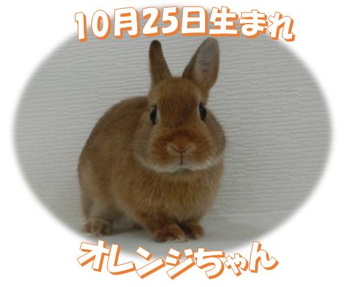 10月25日生まれオレンジちゃん