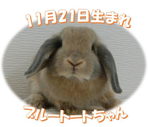 11月21日生まれ