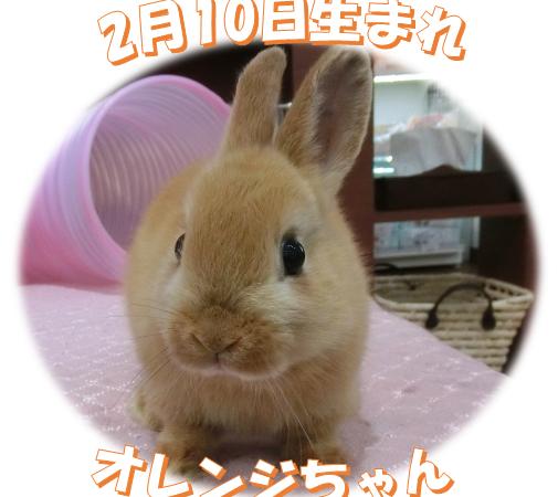 2月10日生まれND オレンジちゃん