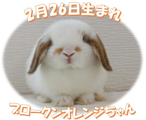 2月26日生まれHLブロークンオレンジちゃん