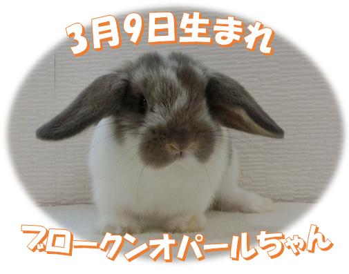 3月9日生まれHLブロークンオパールちゃん