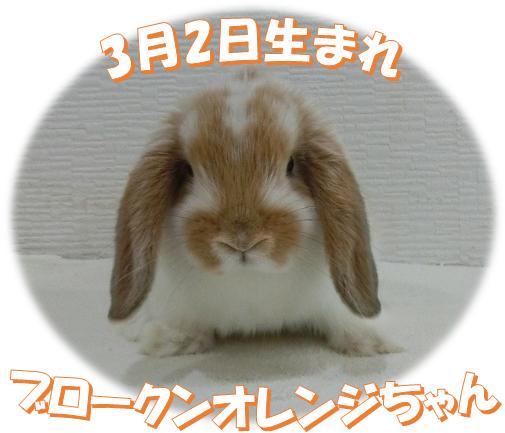 3月2日生まれHLBKNオレンジちゃん
