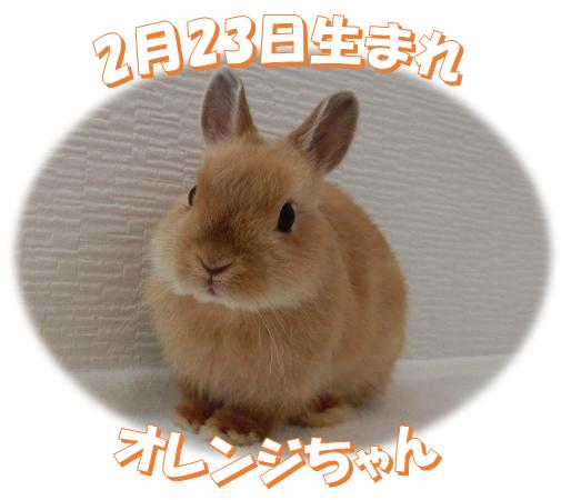 2月23日生まれNDオレンジちゃん