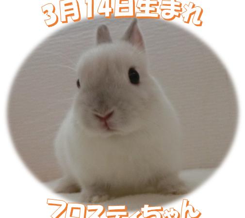 フロスティちゃん3月14日生まれND