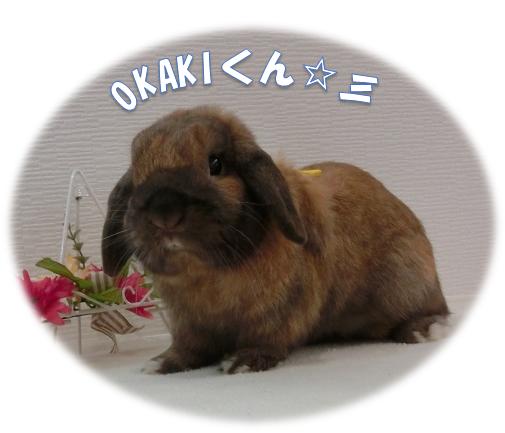 OKAKIくん☆彡