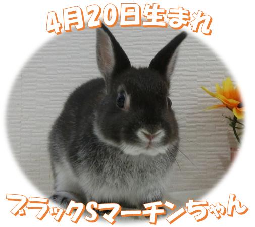 4月20日生まれNDブラックSマーチンちゃん