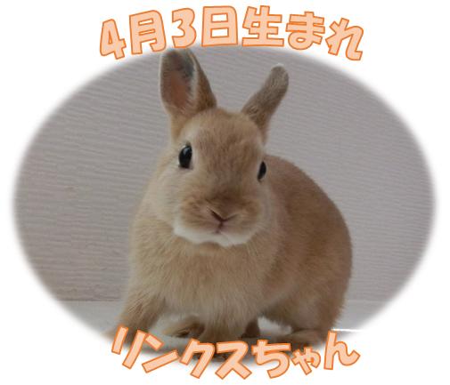 4月3日生まれNDリンクスちゃん