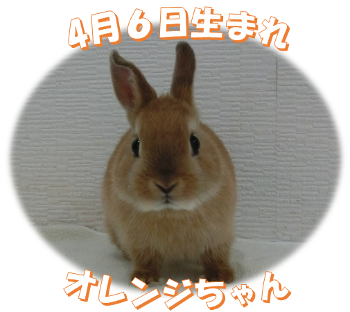 4月6日生まれオレンジちゃん