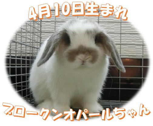 4月10日生まれブロークンオパールちゃん