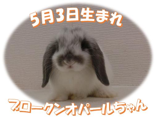 5月3日生まれBKNオパールちゃん