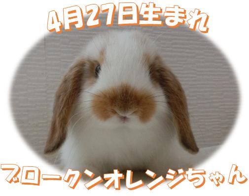 4月27日生まれブロークンオレンジちゃん