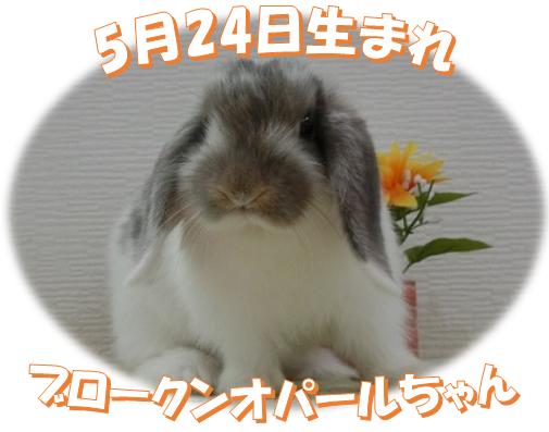 5月24日生まれBKNオパールちゃん
