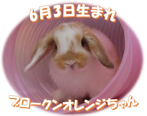 6月3日生まれHLBKNオレンジちゃん