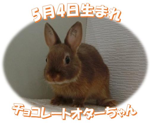 5月4日生まれNDチョコレートオターちゃん