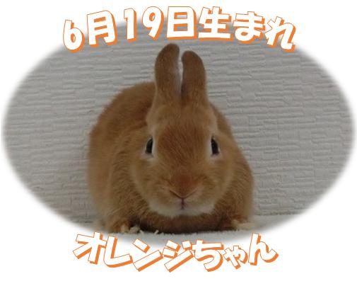 6月19日生まれNDオレンジちゃん
