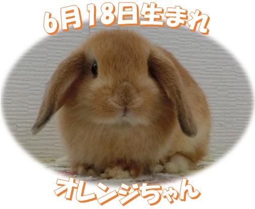 6月18日生まれHLオレンジちゃん
