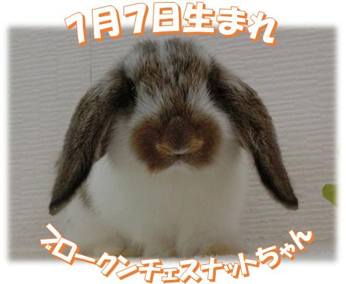 7月7日生まれBKNチェスちゃん