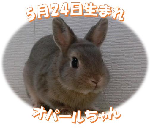 5月24日生まれNDオパールちゃん