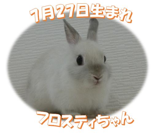 7月27日生まれNDフロスティちゃん