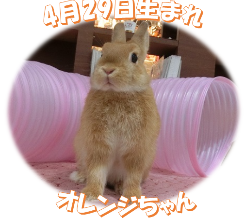 4月29日生まれオレンジNDちゃん