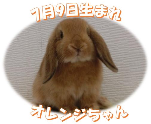7月9日生まれHL オレンジちゃん