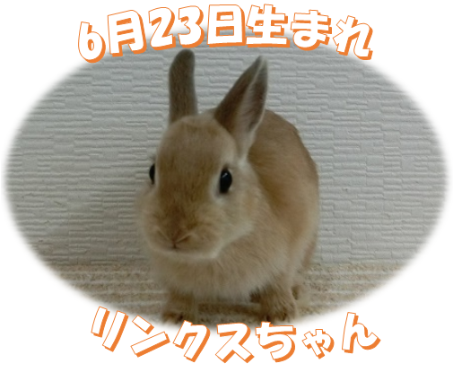 6月23日生まれNDリンクスちゃん