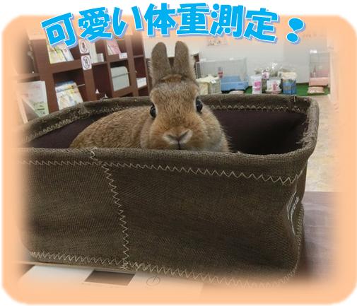 カワ(・∀・)イイ!!体重測定