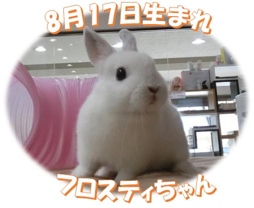 8月17日生まれND フロスティちゃん