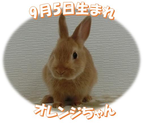 9月5日生まれNDオレンジちゃん