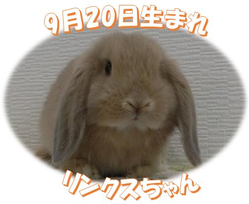 9月20日生まれHLリンクスちゃん