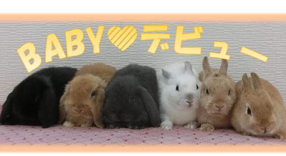 BABYdebyu-
