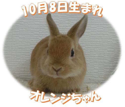 2017年10月9日NDオレンジちゃん