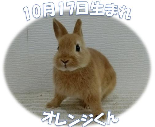10月17日生まれNDオレンジ