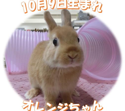 10月9日生まれNDオレンジちゃん