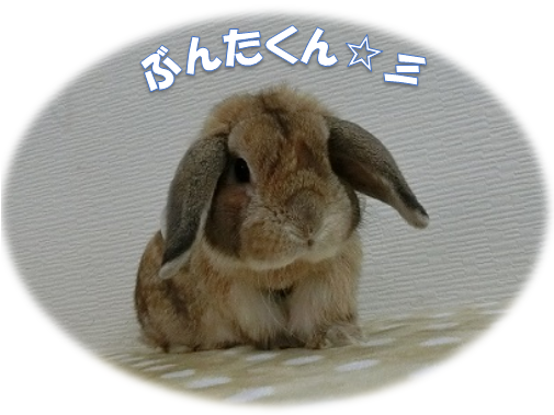 ぶんたくん☆彡