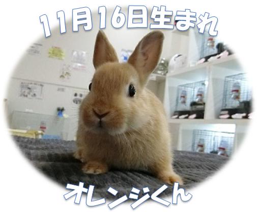 11月16日生まれオレンジくんND