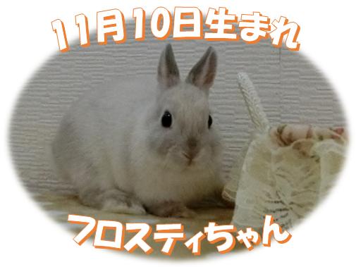 11月10日生まれNDフロスティちゃん