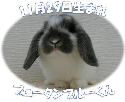 HL11月29日生まれBKNブルーくん