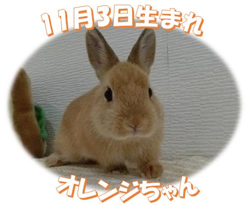 11月3日生まれNDオレンジちゃん