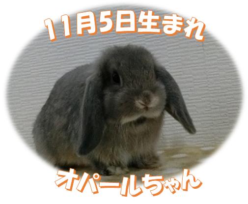 11月5日生まれHLオパールちゃん