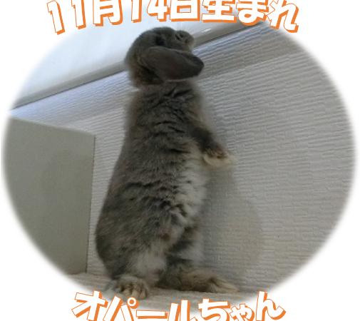 11月14日生まれHLオパールちゃん