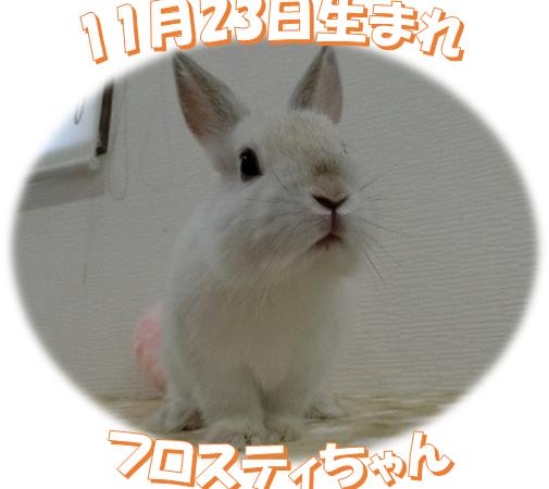 11月23日生まれNDフロスティちゃん