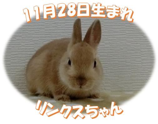 2018年11月28日生まれリンクスちゃん
