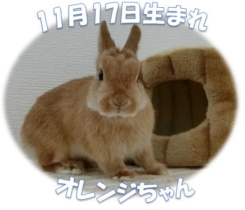 11月17日生まれNDオレンジちゃん
