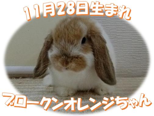 11月28日生まれBKNオレンジちゃん