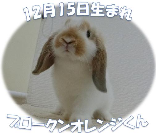 12月15日生まれBKNオレンジくn