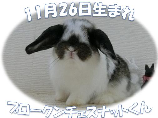 11月26日生まれBKNチェスくん